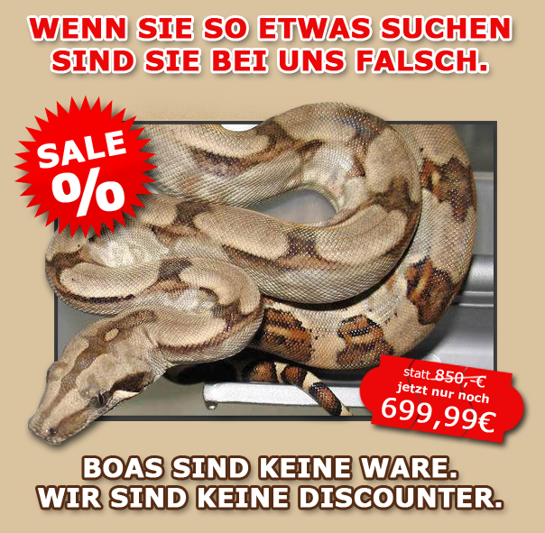 Boa Constrictor Kaufen