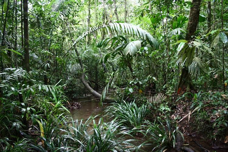 Resultado de imagen para hábitat de las Boas