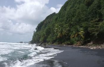 Domenica_Rainforest2.jpg