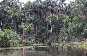 Palmenbäume mit Nestern