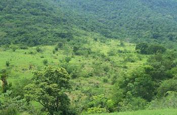 Boa constrictor Habitat Paraguay